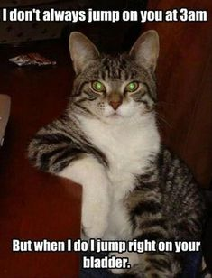 memes Hilarious animal pictures Cats are cute and sometimes unintentionally do stupid funny things, so we have collected some the funniest and most hilarious cat memes and pictures hope you will enjoy em. Funny Animal Pictures, Funny Animals, Cute Animals, Animal Pics, Crazy Animals, Random Pictures, Image Chat, Gatos Cats, Funny Cat Memes