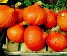 Cooking with Hokkaido pumpkin made easy Make It Simple, Squash, Pumpkin, Vegetables, Health, Food, Herbalife, Easy Cooking, Hokkaido