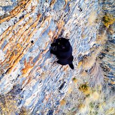 Millie and Craig Armstrong are inseparable mountain-climbing partners. Craig adopted the adorable black feline named Millie from an animal shelter in Park City, Utah… Funny Animal Pictures, Funny Animals, Cute Animals, Cat Climbing, Rock Climbing, Mountain Climbing, Cat Paws, Dog Cat, Video Chat