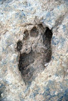 Oldest Footprint Ever Found. This fossil footprint found near Ileret, Kenya and is million years old. These footprints are the oldest ever found of the human genus Ancient Aliens, Ancient History, Ancient Mysteries, Ancient Artifacts, Unexplained Mysteries, Religions Du Monde, Post Mortem, Art Ancien, Early Humans