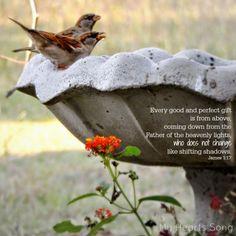 My Heart's Song: Happy Friday - James 1:17