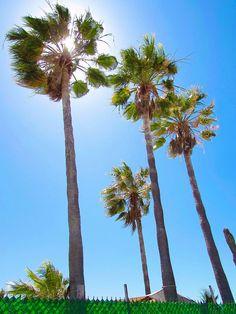 #Bahia #Kino #Playa #Naturaleza #Sonora #México #Playa #Verde #Azul #Café