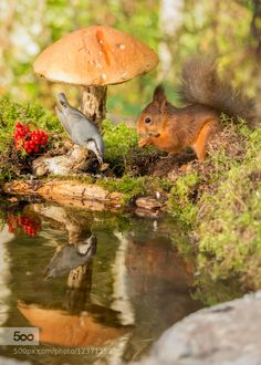 food chasing by geertweggen. Please Like http://fb.me/go4photos and Follow @go4fotos Thank You. :-)