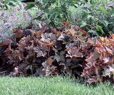 -- so there's a coralbells for almost every garden. Bonus: While hummingbirds love the plants, deer don't. Plant Name: Heuchera selections Growing Conditions: Sun to shade, depending on selection, and moist, well-drained soil Size: From 1 to 3 feet tall and wide, depending on type Zones: 4-8