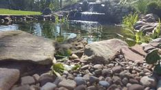 How to build a backyard water garden pond. You will be enjoying your own waterfall with the soothing sounds of rushing water right in your own backyard. Pond Plants, Aquatic Plants, Water Plants, Fish Pond Gardens, Water Gardens, Plantas Indoor, Garden Pond Design, Building A Pond, Waterfall Building