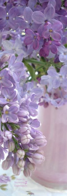 lilacs:  remember the fragrance?
