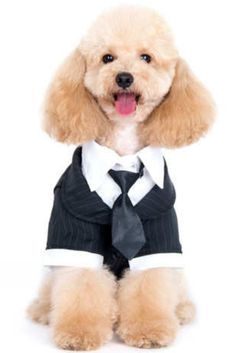 Looking for dog and cat costume ideas for Halloween? Look no further than these 10 options, all available on Amazon. Best Dog Halloween Costumes, Halloween Looks, Shark Costumes, Dinosaur Costume, Lion Mane, Black Sweaters, Tuxedo, Best Dogs, Dog Cat