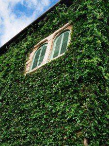 """Если Вы   загорелись идеей посадить растения-лианы для украшения стен своей  дачи. Для этого необходимо проделать 5 простых шагов http://sadik-mechty.ru/?p=587. Если Вы считаете данную информацию интересной и полезной, нажмите """"нравится""""."""