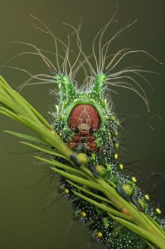 Aliens on Earth: Macro Pictures by Igor Siwanowicz A Chinese comet moth caterpillar – Odd Stuff Magazine