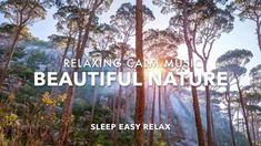 Calming Relaxing music with sounds of the forest. Ideal for calm relaxation anytime, especially before sleep. Sleep Easy Relax channel is perfect for relaxat. Calming Songs, Relaxing Music, Forest Sounds, Native American Music, Chakra Cleanse, Stress Relief Music, Reiki Practitioner, Sleep Help, Nature Sounds