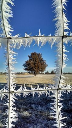 Funny pictures about Ice crystals on a fence. Oh, and cool pics about Ice crystals on a fence. Also, Ice crystals on a fence. Winter Szenen, Winter Magic, Land Art, Amazing Photography, Nature Photography, Cool Pictures, Cool Photos, Funny Pictures, Winter Pictures