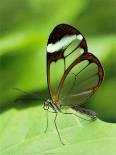 Je ne puis pas plus te montrer un papillon dans une chenille , qu une fraise dans une fleur , il faut que le soleil ait mûri l un et l autre .