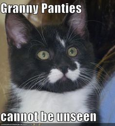 - World's largest collection of cat memes and other animals Granny Panties, Cat Memes, Satin, War, Humor, Google Search, Funny, Animals, Animales