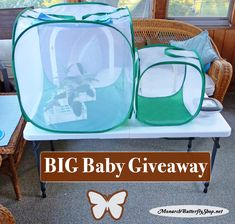 TWO Butterfly Cages, Floral Tubes, Floral Tube Rack, Poo Poo Platter, and LED magnifier - Enter to win 5 raising monarchs prize pack bundles through August Butterfly Cage, Butterfly Life Cycle, Butterfly House, Monarch Butterfly, Baby Giveaways, Monarch Caterpillar, How Big Is Baby, Big Baby, Bee Keeping