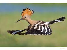 A Showcase of Sensational Birds Photography | The Stuff Makes Me Happy