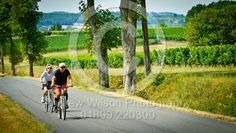 Tourist cycling past vineyards in the Dordogne, France in summer