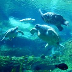 Sea World Orlando Florida (Best Honeymoon Destinations In USA) 10