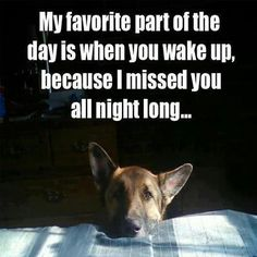 Wicked Training Your German Shepherd Dog Ideas. Mind Blowing Training Your German Shepherd Dog Ideas. Funny Animal Pictures, Funny Animals, Cute Animals, Dog Pictures, Animals Dog, I Love Dogs, Cute Dogs, Awesome Dogs, Big Dogs
