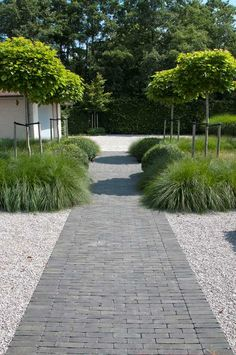 Driveway Landscaping, Modern Landscaping, Back Gardens, Small Gardens, Modern Gardens, Garden Modern, Paver Path, Types Of Herbs, Backyard Fireplace
