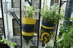 How to Make a Hanging Herb garden using soda bottles.... not so sure about the painting but love the idea