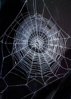 Beautiful Spiders | Beautiful Spider Web How to collect spider webs