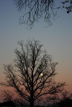 Moon rising through the silhouette of a tree