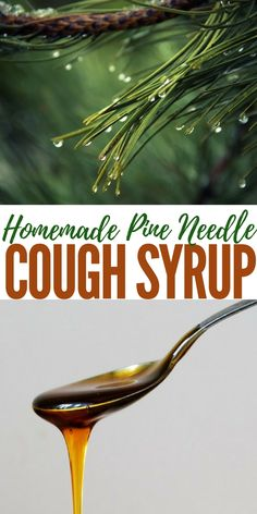 Homemade Pine Needle Cough Syrup - What if you were to discover one of the most potent cough suppressant and anti-inflammatory compounds is found in your backyard?