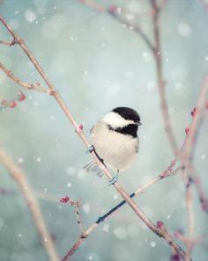 Chickadee in Snow No. 18 - fine art bird photography print by Allison Trentelman – Rocky Top Studio