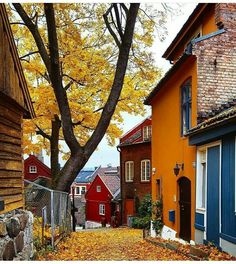 The beautiful colors of the streets of Oslo