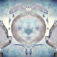 Every owl in this creation is the same owl I have spent 3 winters photography:)<br/> <br/> <br/> <br/> snow, owl, owls, snowy owl. Heather King, Imagination Art, Mirror Art, Snowy Owl, The Ordinary, Fine Art America, Nature Photography, Digital Art, Art Prints