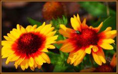 Γη και Ελευθερία.: Οπως μία λέξη... Poetry, Plants, Blog, Blogging, Poetry Books, Plant, Poem, Poems, Planting