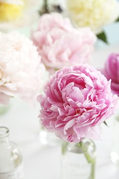 Individual peonies - so cute and luscious at the same time