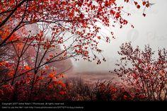 Foto 'Herbstnebel' von 'Ulrike Adam'