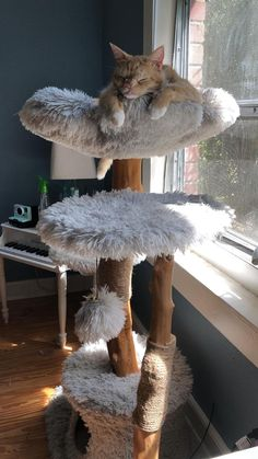 Wooden Cat Tree, Diy Cat Tree, Wood Cat, Best Cat Tree, Cat Trees Diy Easy, Modern Cat Furniture, Pet Furniture, Modern Cat Beds, Cat Condo