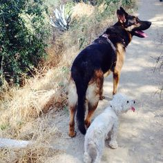 @gsd_chief The little couple out for a hike