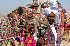 (CAMELLOS ADORNADOS) - India Beat at the Pushkar Camel Fair
