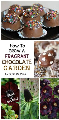 How about a garden that smells like a delicious box of chocolates! Find out which flowers you can grow that have a beautiful chocolate scent. Grow them alongside chocolate-colored blooms and leaves and you'll have a wonderful chocolate garden. #sponsored
