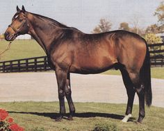 Deputy Minister. Champion 2 year old and Canadian Horse Of The Year in 1981, Deputy Minister would go on to become a 2 time leading sire in North America. He was by Vice Regent - Mint Copy by Bunty's Flight and was bred by the Centurion Farm in Ontario. Deputy Minister represented many generations of Canadian breeding through both his sire and dam. Among his top get were Open Mind, Go For Wand, Silver Deputy,Touch Gold, and leading sire Awesome Again.