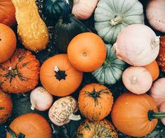 fall gourds and pumpkins