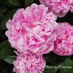 Vegetables, Rose, Flowers, Plants, Design, Pink, Vegetable Recipes, Plant