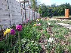 Záplava tulipánov v rodinnej záhrade Plants, Plant, Planets