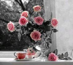 Rosas rosas..