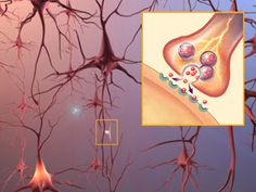 Balancing Your Brain Chemistry: Testing and Treating Neurotransmitter Imbalances - Jill Carnahan, MD
