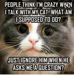 Funny Cats, Cute Cats, Funny Animals, Funny Images, Funny Cat Pictures, Cat People, Baby Cats, Crazy Cat Lady, Thursday
