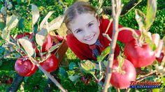 Fall Fun: You-Pick Apple Orchards in Michigan