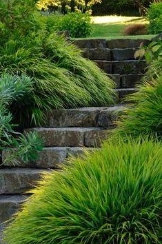 carex: garden design by carolyn mullet trávy kolem schodů