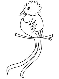 Click to see printable version of Quetzal Bird-of-Paradise