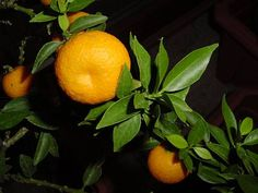 Berries, Orange, Vegetables, Fruit, Abundance, Lemon, Lower Cholesterol, Guava Fruit, Grasses