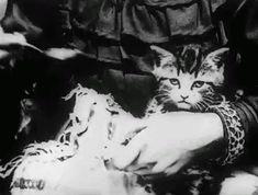 Eating Retro Kitten | Kittyworks