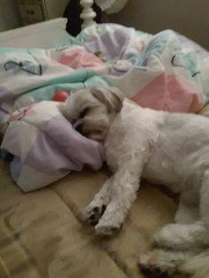 Jr taking nap